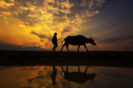 Silhouette sunset with lifestyle countryside,Silhouette Animal husbandry in countryside,Farmer with animal dark tone