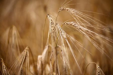 grain Stock Photo