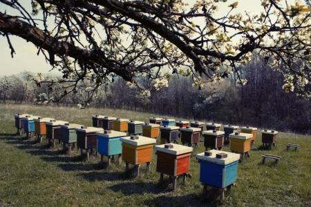 colmena: Casas de las abejas Foto de archivo