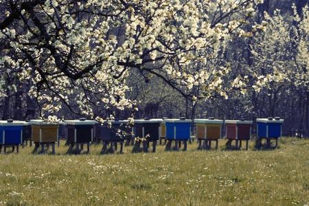 beehive spring