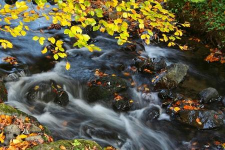 Autumn Stock Photo - 11008060
