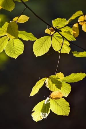 Beateful colorful autumn leaves