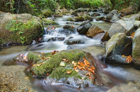 Beautiful mountain stream in forest