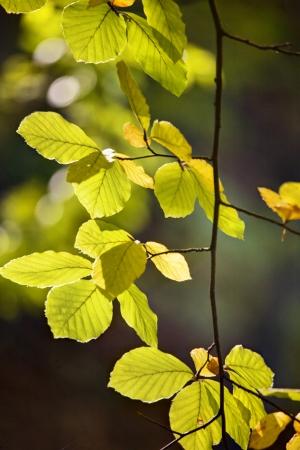 leaves in october