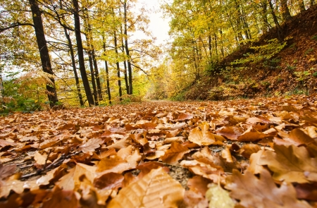 Beautiful Colorful Autumn Leaves  Stock Photo - 16380640