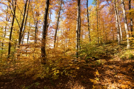 Mountain autumn landscape with colorful forest  photo