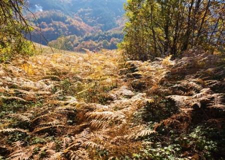 Beautiful Colorful Autumn Stock Photo - 16380675