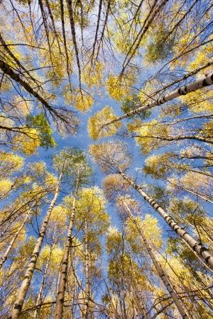 Beautiful autumn forest Stock Photo - 16380683