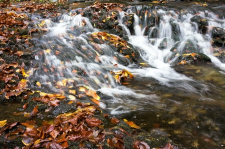 Beautiful creek the autumn photo