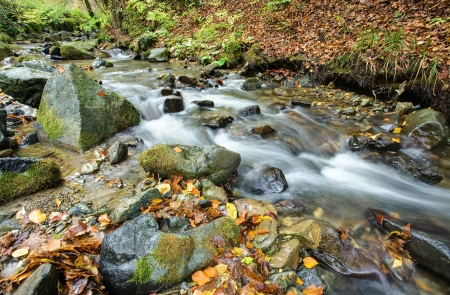 Beautiful view the river in mountain forest  Stock Photo - 16538157