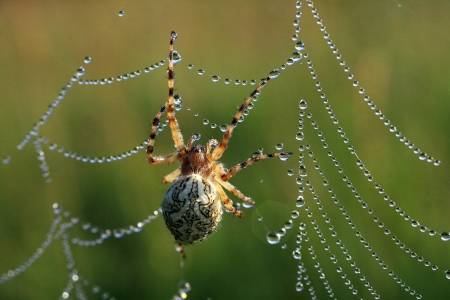 The spider of nature  photo