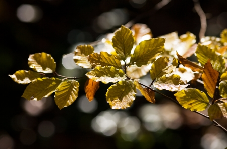 Autumn leaves in moring Stock Photo - 17107486