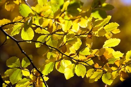 Colorful Autumn Leaves Stock Photo - 17107454