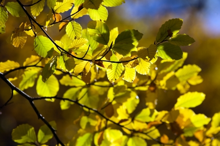 Beautiful Colorful Autumn Leaves  Stock Photo - 17107451