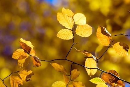 Autumn Leaves Stock Photo - 17107548