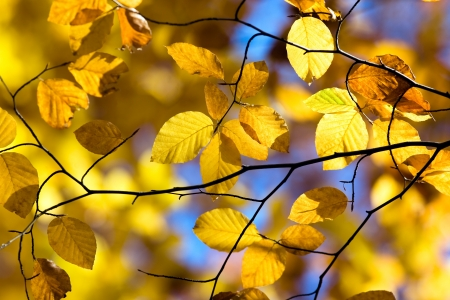 Colorful Autumn Leaves in forest Stock Photo - 17107453