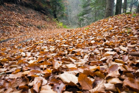 Leaves in forest Stock Photo - 17106275