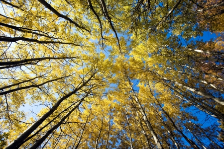 nature landscape: autumn trees in the forest  Stock Photo