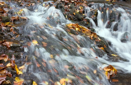 The stream in october photo