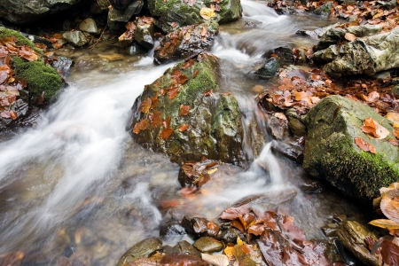 stream in autumn photo
