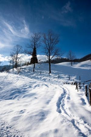 trees winter Stock Photo - 17771786