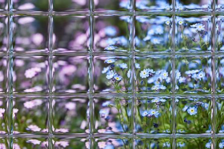 flowers in spring through window panes Stock Photo