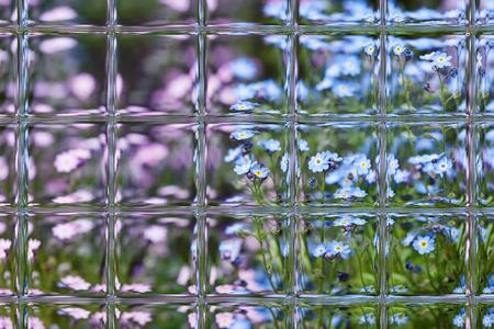 flowers in spring through window panes Stock Photo