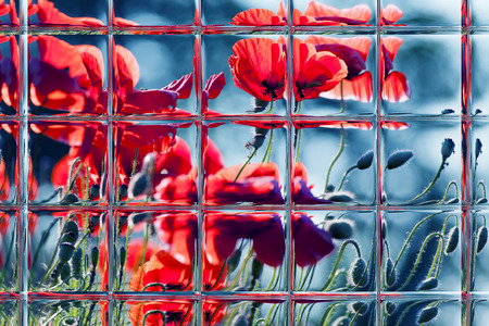 Abstract blurred defocused bokeh background of poppy flowers through window panes