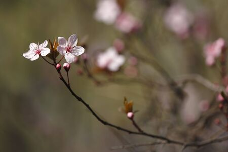 Beautiful spring elowers