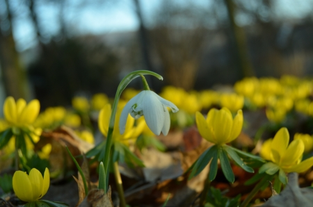 disappeared: Yesterday last snow disappeared and today, there is a little beauty    Stock Photo
