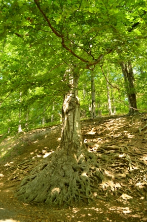 labyrinthine: fantasy roots of old tree