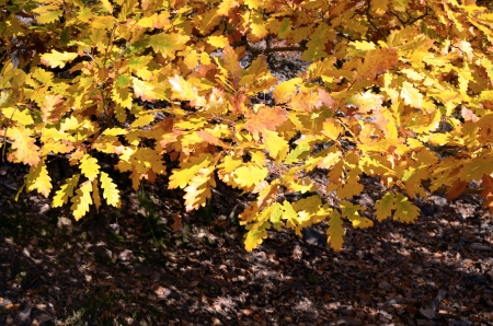 fall leaves of beech photo
