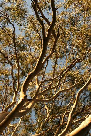 Trees Stock Photo - 7299349