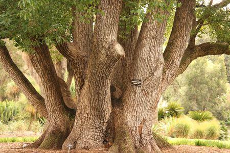 tree trunk: Tree