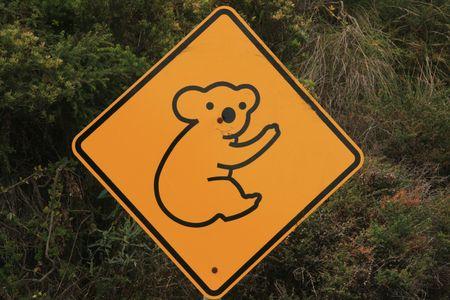 Koala Stock Photo - 7970500