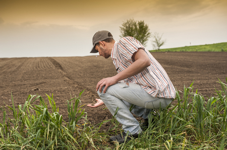 agricultural tenure: Planting soybean on field