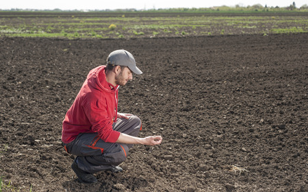 tenure: Planting soybean on field