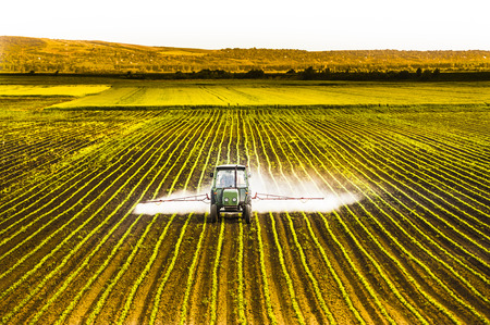 Tractor spraying a field of corn Stockfoto