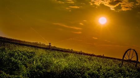 irrigation field: Irrigation system on field. Paprika Stock Photo