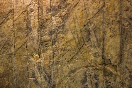 paleontology: stone with cracks on the surface, paleontology Museum Stock Photo