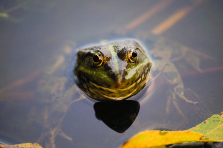 close-up portrait of a frog and insects in a bog