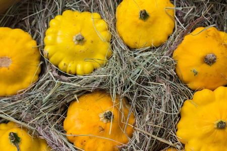 cucurbit: yellow Patty Pan squash displayed at farmers market. Pumpkin cucurbit Stock Photo