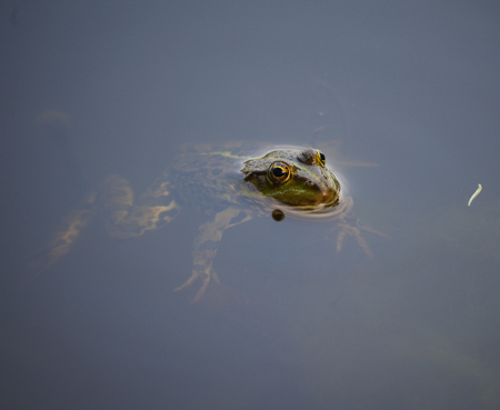anuran: close-up portrait of a frog and insects in a bog