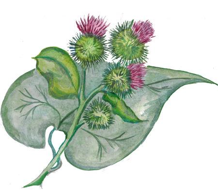 緑の葉とゴボウの花。水彩画。ビットマップ 写真素材