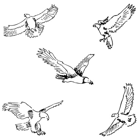 Eagles. Sketch pencil. Drawing by hand Vector image Illustration