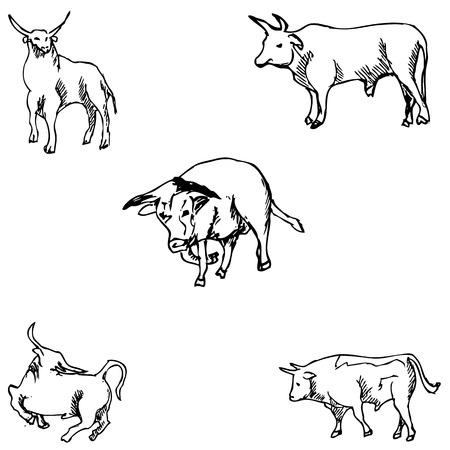 ruminant: Bulls. Sketch pencil. Drawing by hand Vector image