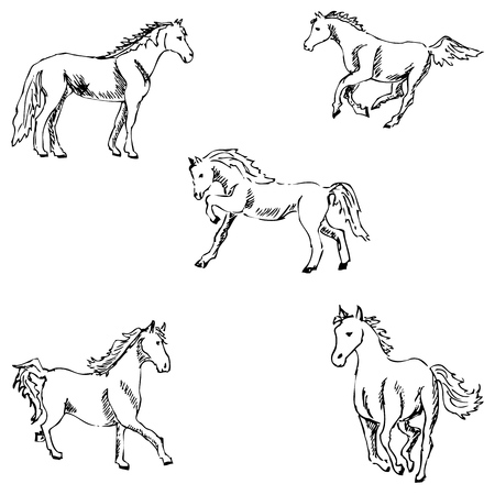 pencil drawings: Horses. A sketch by hand. Pencil drawing. Vector image Illustration