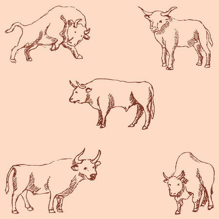Bulls. Sketch pencil. Drawing by hand. Vintage colors. Vector image