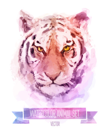 Vector set of watercolor illustrations. Cute tiger