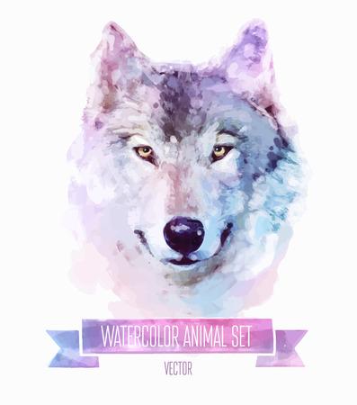 animais: Jogo do vetor de ilustrações de aquarela. Lobo bonito